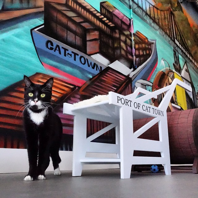 10 Cat Cafés You Can Visit in North America